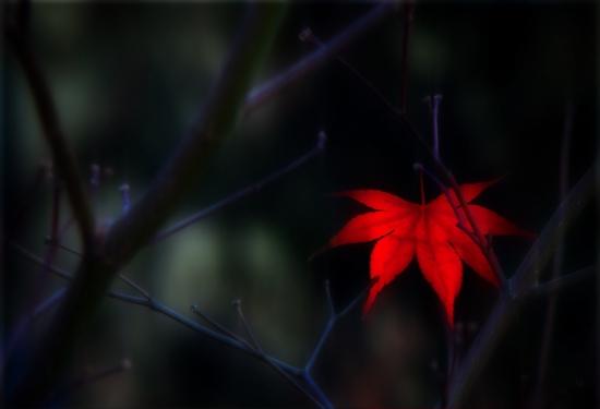Obraz V srdci podzimu