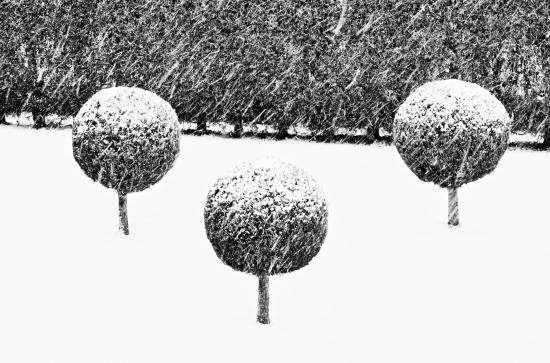 Obraz Zasněžené stromy
