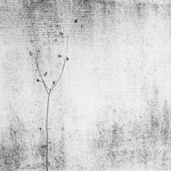 Obraz Osamocena