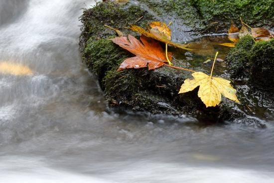 Obraz Lesní potok