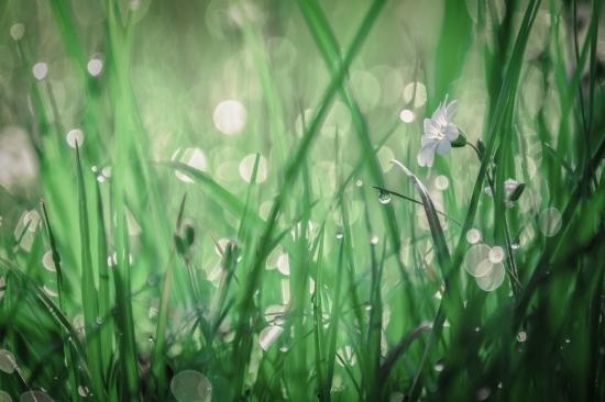 Obraz Perly v trávě