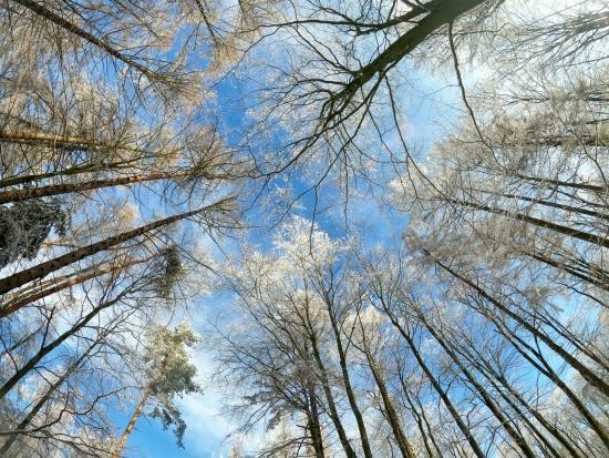 Obraz Zima v lese