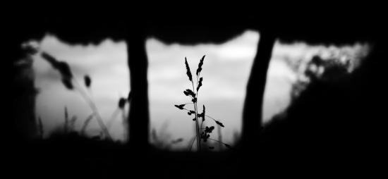 Obraz Průhled do přírody