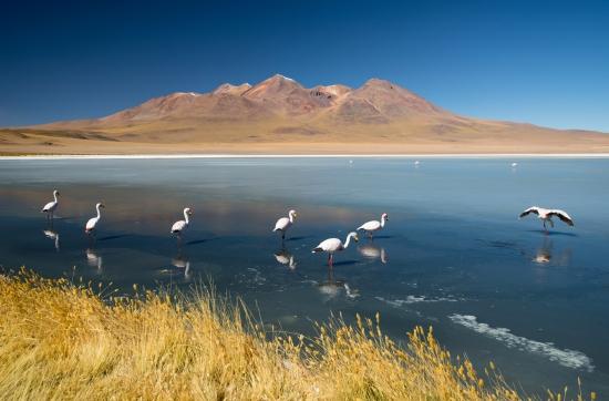 Obraz Laguna Hedionda - Bolívie