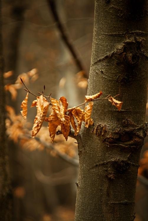Obraz Zlatý podzim II
