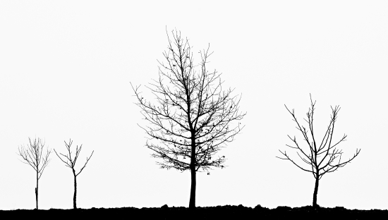 Obraz Stromové siluety