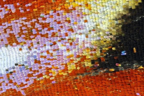 Obraz Abstrakce babočky paví oko