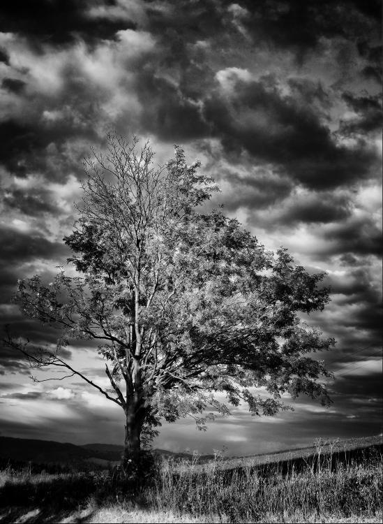Obraz Dominantní strom v krajině s rozbouřenou oblohou
