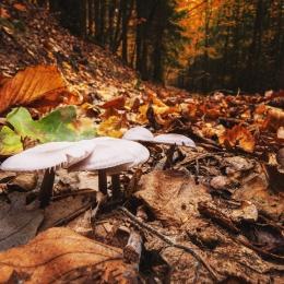 Obraz Podzim v lese.