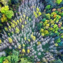 Obraz Barevný les