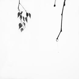 Obraz Po dešti