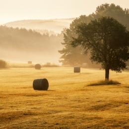 Obraz Mlžné ráno