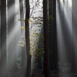 Obraz Světlo a les
