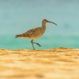 Obraz Pták koliha na pláži proti moři