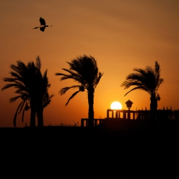 Obraz Západ slunce s volavkou