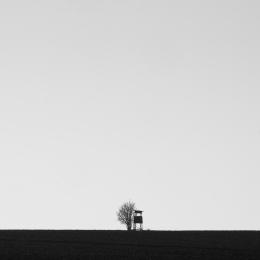 Minimalistický černobílý obraz s posedem a stromem
