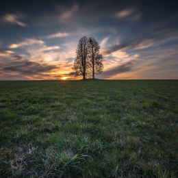 Obraz Osamocený strom