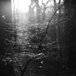 Obraz Světlo ve větvích