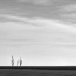 Fotoobraz krajiny se třemi stromy