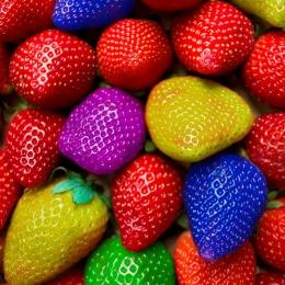 Obraz Jahodový chameleon - zelené,modré,žluté,fialové a červené jahody