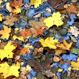 Obraz Listí na hladině vody