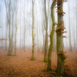 Obraz Ranní mlha v lese