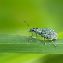 Obraz Zelený krasavec