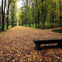 Obraz V podzimním parku