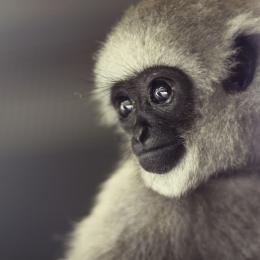 Obraz Portrét primáta - pohled