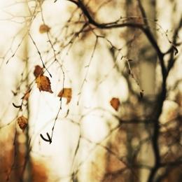 Obraz Nádherný obraz podzimní břízy