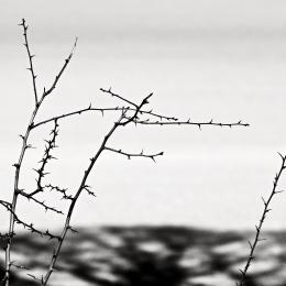 Obraz Větvičky