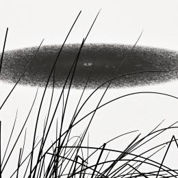 Obraz Stébla trávy