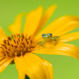 Obraz Rosněnka žlutonohá