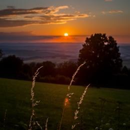 Obraz Stébla trávy v západu slunce