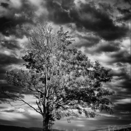 Dominantní strom v krajině s rozbouřenou oblohou